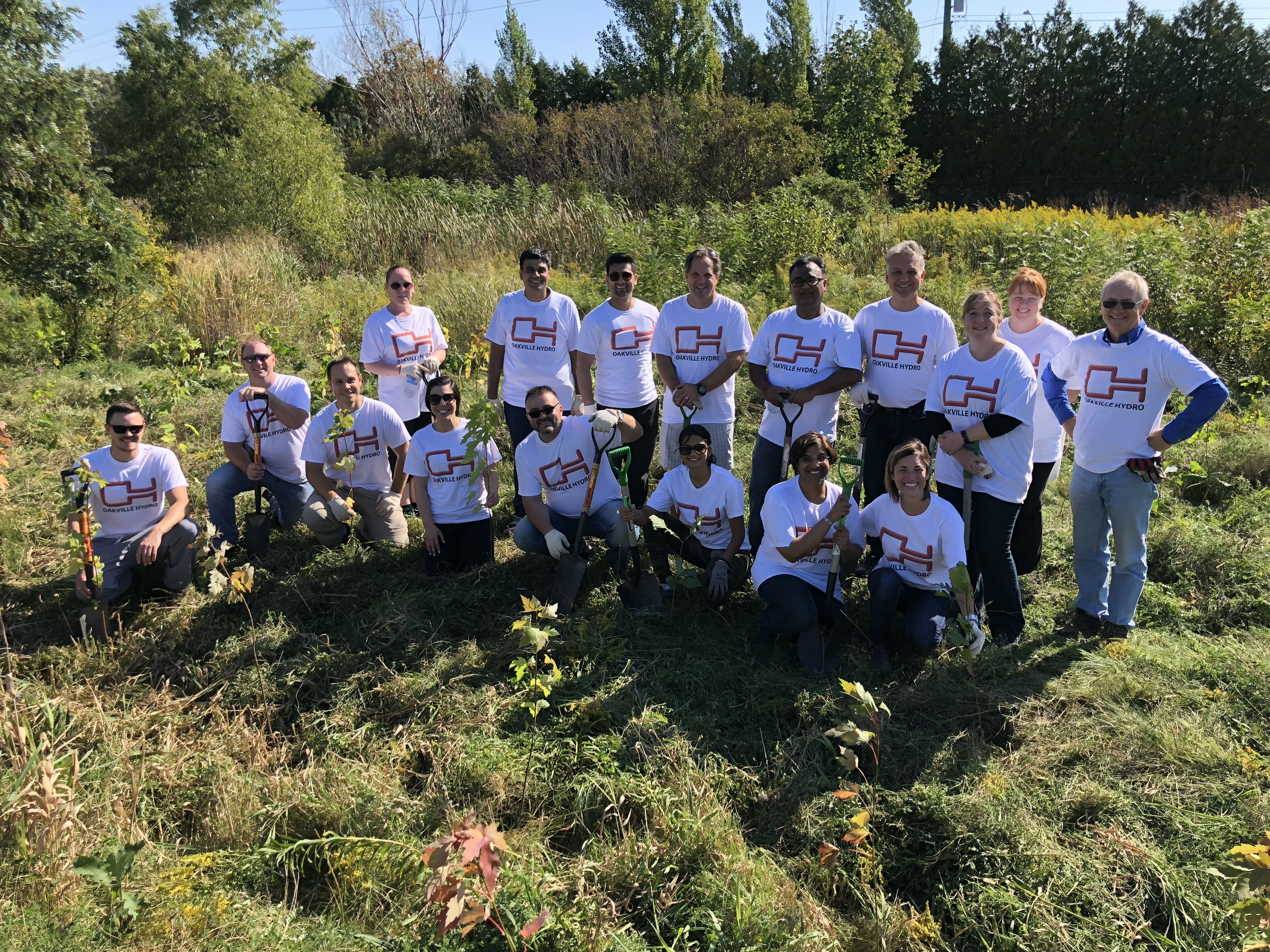 The Works Oakville >> Town Receives 1680 Trees From Oakville Hydro